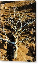 Brins Mesa 07-104 Stripped Bare Acrylic Print by Scott McAllister