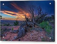 Bristlecone Sunset Acrylic Print