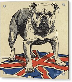 British Bulldog Standing On The Union Jack Flag Acrylic Print
