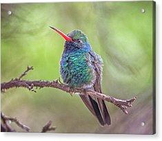 Broad-billed Hummingbird 3652 Acrylic Print