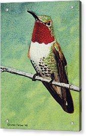 Broad-tailed Hummingbird Acrylic Print by Sharon Farber