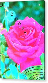 Acrylic Print featuring the photograph Broadcasting Rose by Rod Ismay