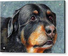 Brody Acrylic Print by Melissa J Szymanski