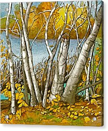 Acrylic Print featuring the painting Broken Birch  by Lynn Babineau