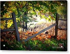 Broken Fence In Sycamore Park Acrylic Print by Carol Groenen