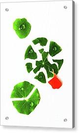 Broken Green Leaves Acrylic Print