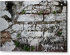 Broken Stucco Wall With Whitewashed Exposed Brick Texture And Ve Acrylic Print