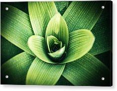 Bromelia Acrylic Print
