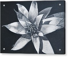 Bromeliad Acrylic Print by Diane Cutter