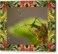 Acrylic Print featuring the photograph Bromeliad Grasshopper by Bell And Todd