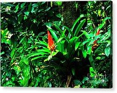 Bromeliads El Yunque  Acrylic Print