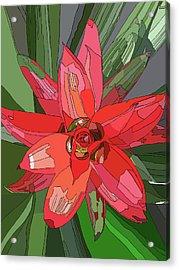 Bromiliad Acrylic Print