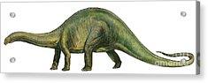 Brontosaurus, A Prehistoric Era Acrylic Print