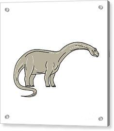 Brontosaurus Dinosaur Looking Down Mono Line Acrylic Print