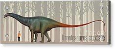 Brontosaurus Excelsus Size Compatison Acrylic Print