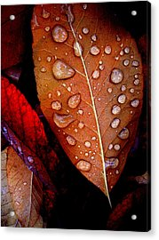Bronzed Leaf Acrylic Print by The Forests Edge Photography - Diane Sandoval