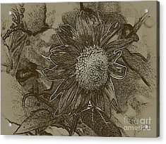 Bronzed Out Sunflower Acrylic Print