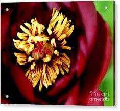 Brooding II  Acrylic Print by Valerie Fuqua