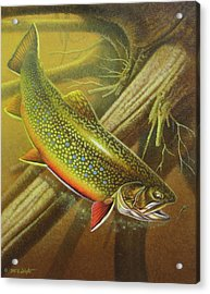 Brook Trout Cover Acrylic Print by JQ Licensing