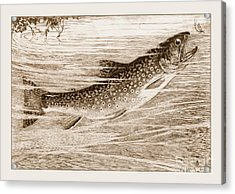 Acrylic Print featuring the photograph Brook Trout Going After A Fly by John Stephens