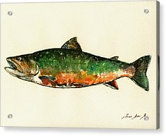 Brook Trout Acrylic Print by Juan  Bosco