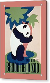 Brookfield Zoo Panda Acrylic Print by Unknown
