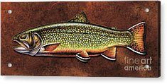 Brookie Dream Acrylic Print by Jon Q Wright