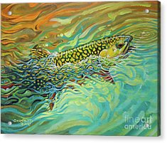 Brookie Flash Rework Acrylic Print