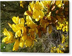 Broom In Bloom Acrylic Print