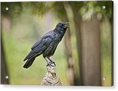 Brother Crow On St. Francis' Head Acrylic Print by Bonnie Barry