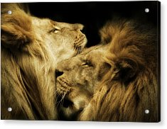 Brothers Acrylic Print by Animus  Photography