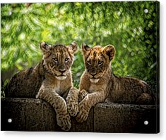 Brothers Chillin Acrylic Print by Cheri McEachin