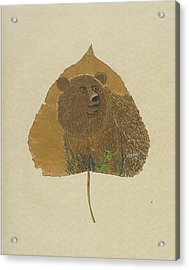Brow Bear #2 Acrylic Print by Ralph Root