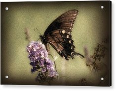 Brown And Beautiful Acrylic Print