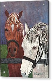Brown And White Horses Acrylic Print