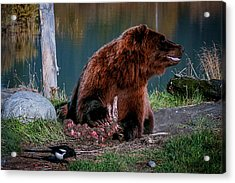 Brown Bear And Magpie Acrylic Print
