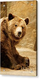 Acrylic Print featuring the photograph Brown Bear by Louise Fahy