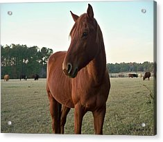 Acrylic Print featuring the photograph Brown Beauty by Betty Northcutt
