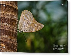 Brown Butterfly Acrylic Print by Lisa Plymell
