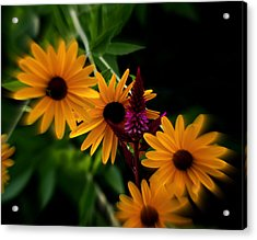 Brown Eyed Susans Acrylic Print by Martin Morehead