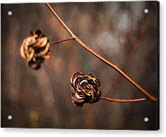Brown Flower Seed Acrylic Print