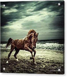 Brown Horse Galloping On The Coastline Acrylic Print