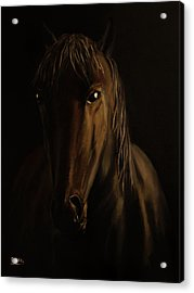 Brown Horse Acrylic Print