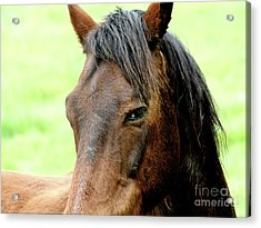 Brown Horse With Sultry Eye . R5907 Acrylic Print by Wingsdomain Art and Photography