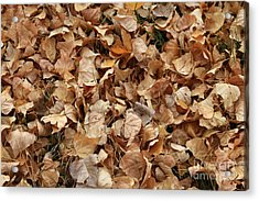 Brown Leaf Carpet Acrylic Print