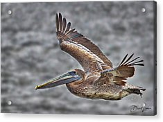 Acrylic Print featuring the photograph Brown Pelican Flying by David A Lane