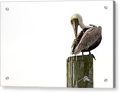 Brown Pelican On Piling Acrylic Print