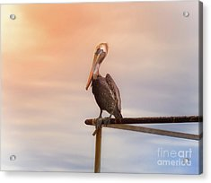 Acrylic Print featuring the photograph Brown Pelican Sunset by Robert Frederick