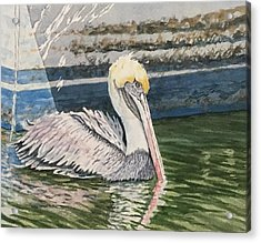 Brown Pelican Swimming Acrylic Print by Don Bosley