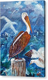 Brown Pelican With Gulls Acrylic Print